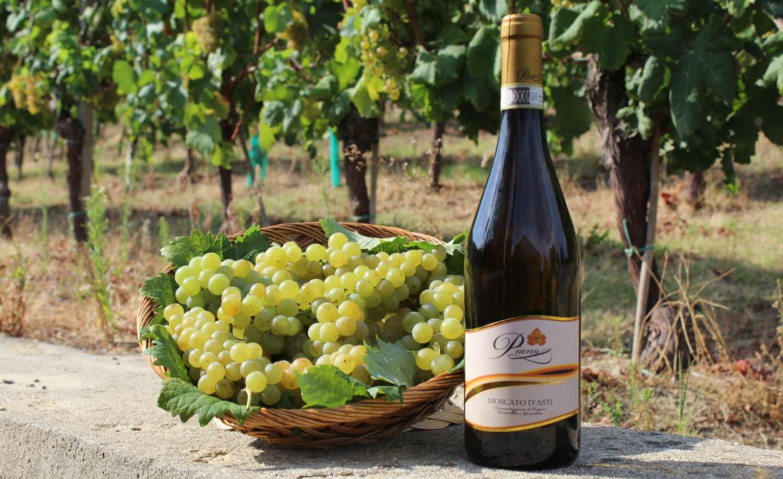 Azienda vitivinicola piano in Calosso d'Asti
